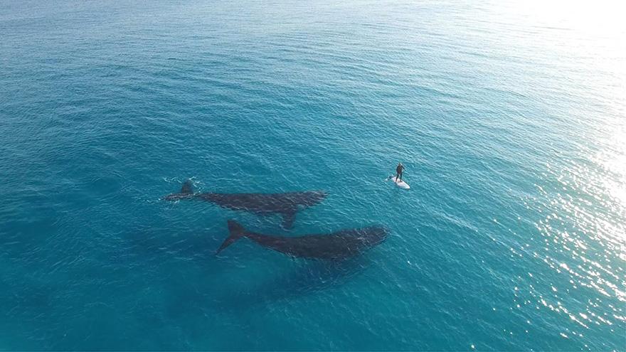 velichestvennye-foto-kitov-13