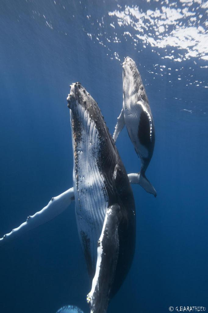 velichestvennye-foto-kitov-15