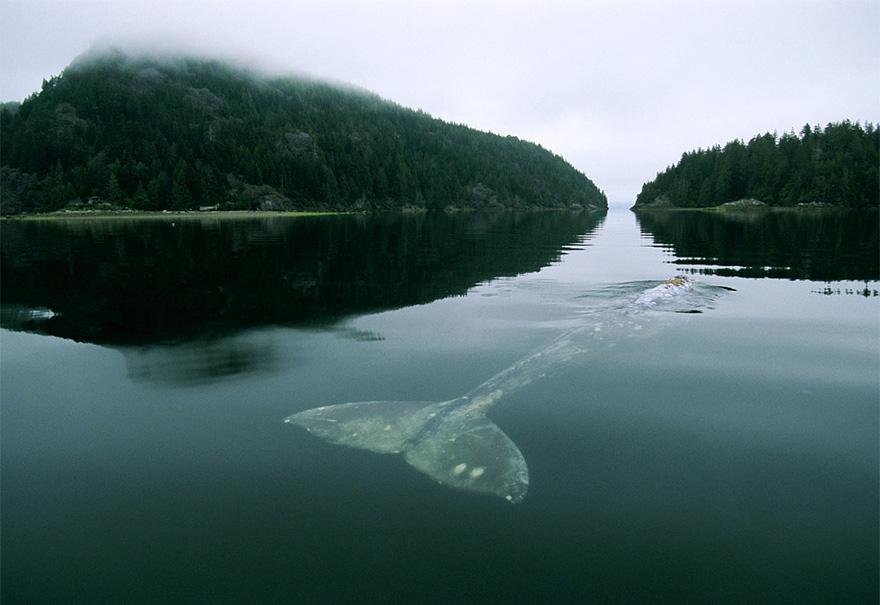 velichestvennye-foto-kitov-4