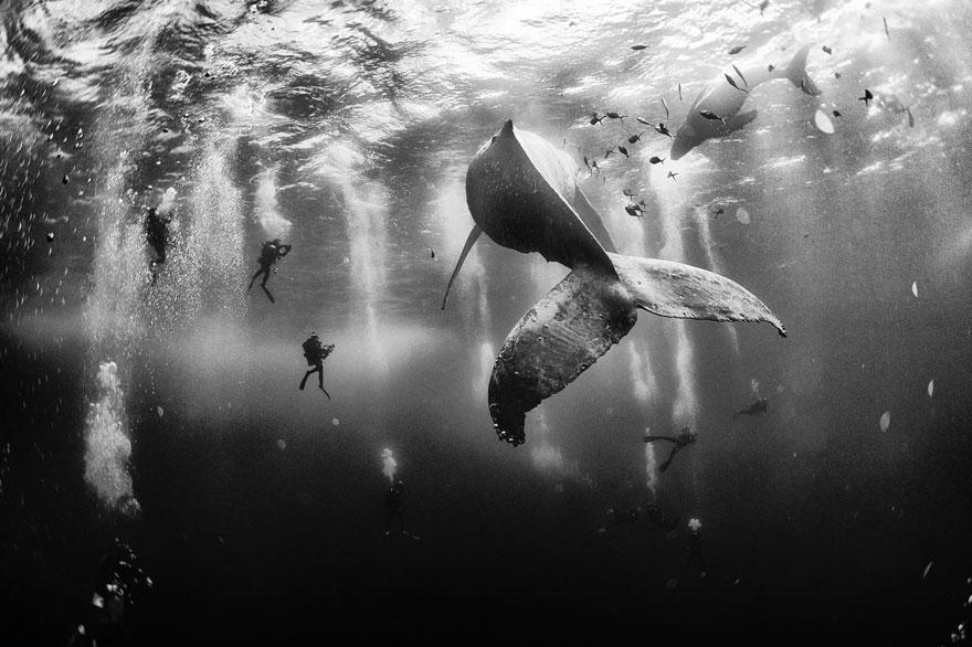 velichestvennye-foto-kitov-6