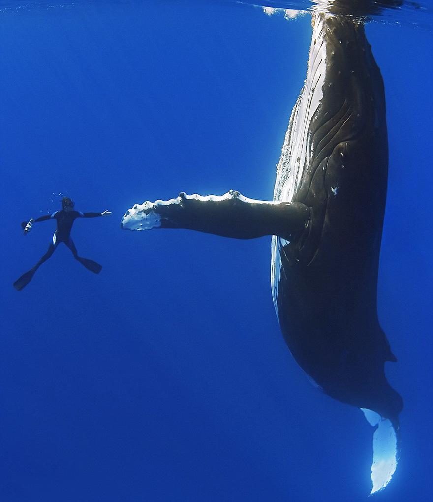 velichestvennye-foto-kitov-8