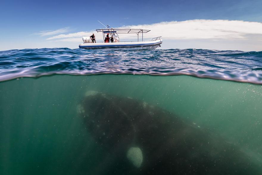velichestvennye-foto-kitov-9