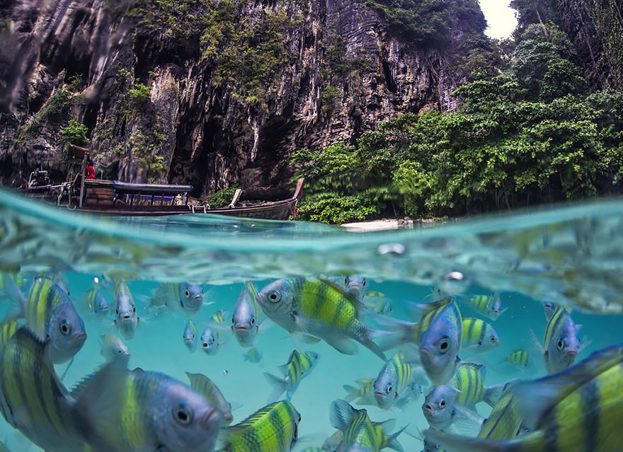 14. Подводная жизнь на островах Таиланда