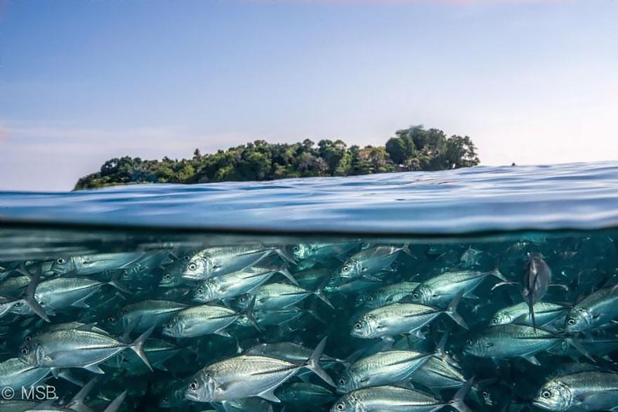 8. Под водой и над водой