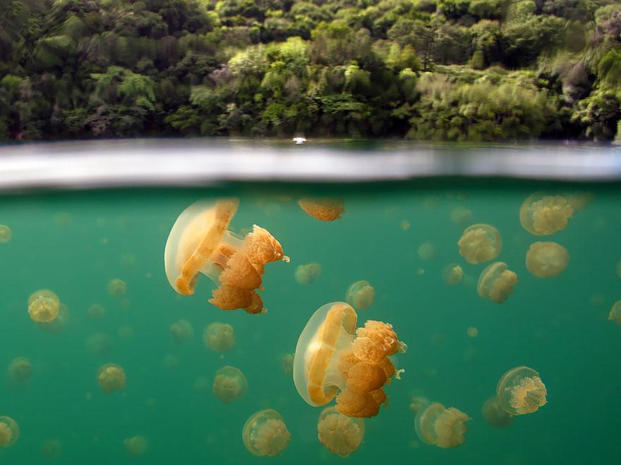 12. Медузы и острова