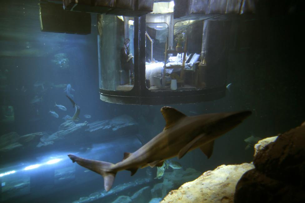 People look at sharks from an underwater room structure installed in the Aquarium of Paris