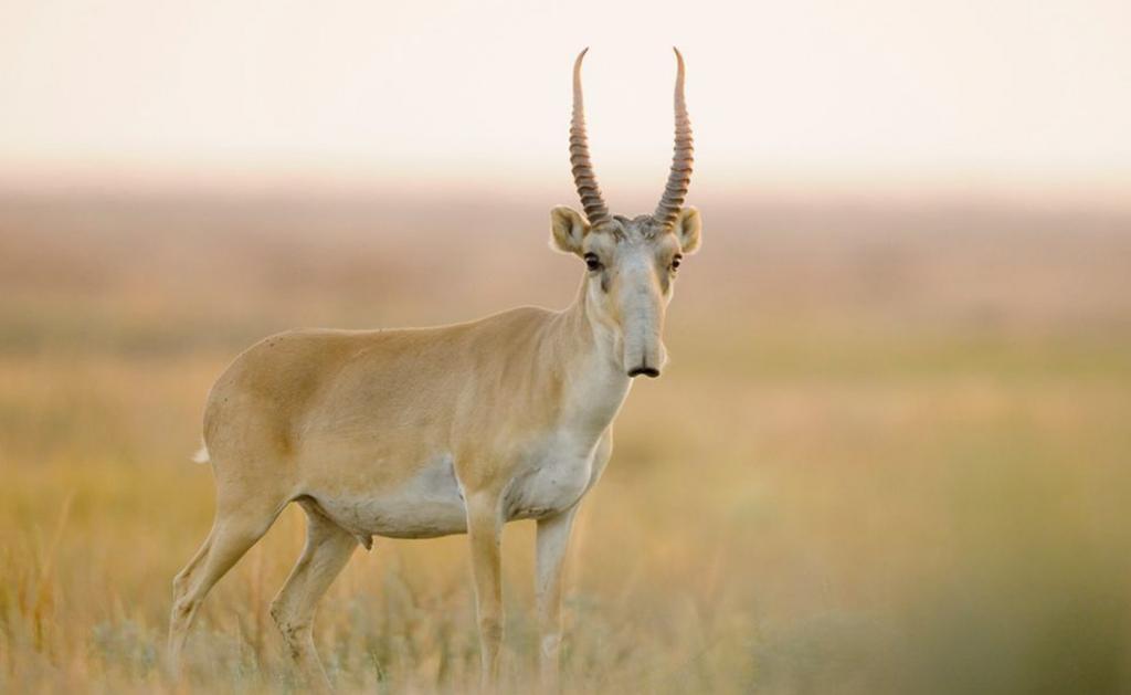 9 мифических животных, которые существуют на самом деле
