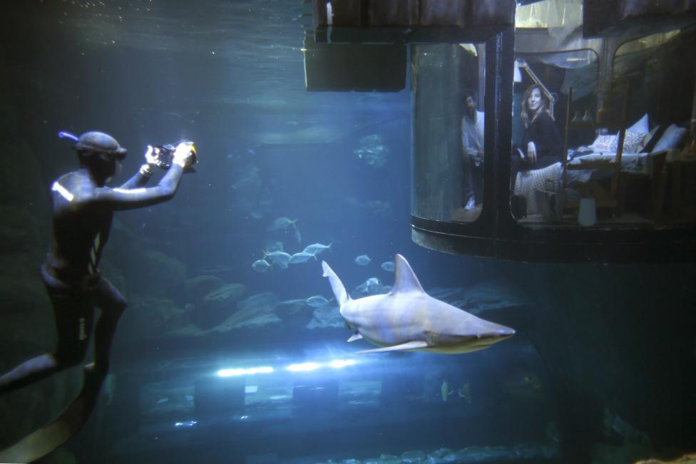 A diver takes pictures as people look at sharks from an underwater room structure installed in the Aquarium of Paris