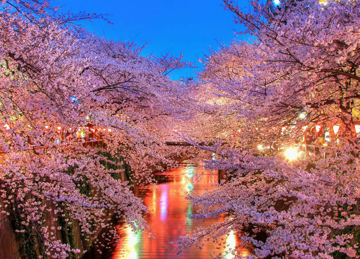Anytime-Youre-Admiring-The-Blooming-Sakura-Trees