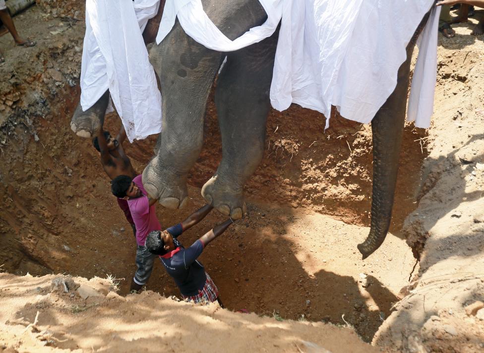 Spotlight: Funeral of an elephant