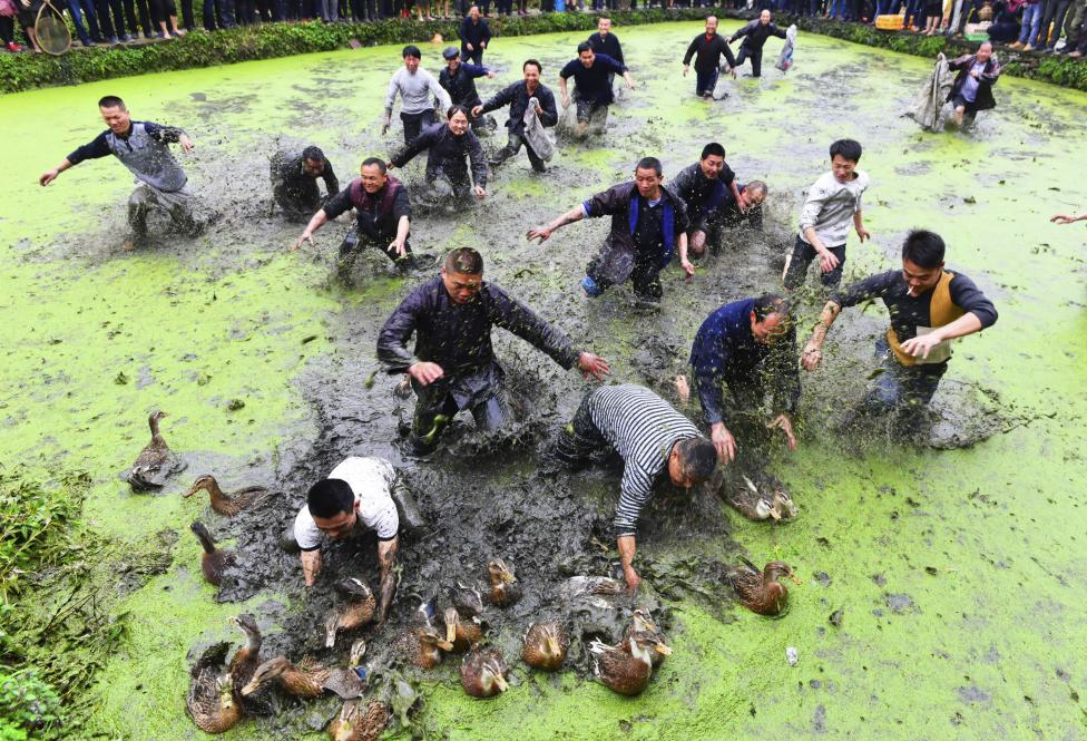 Villagers catch ducks as they celebrate a traditional festival of ethnic Miao, in Jianhe