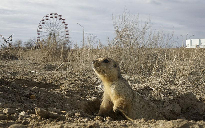 KAZAKHSTAN-ANIMALS/