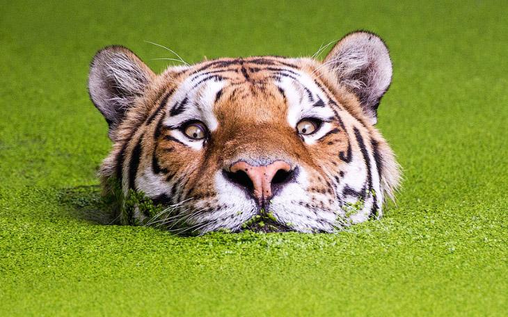 Прекрасные животные в фотографиях