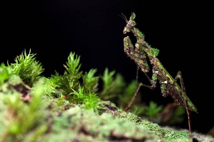 Невидимые насекомые в фотографиях