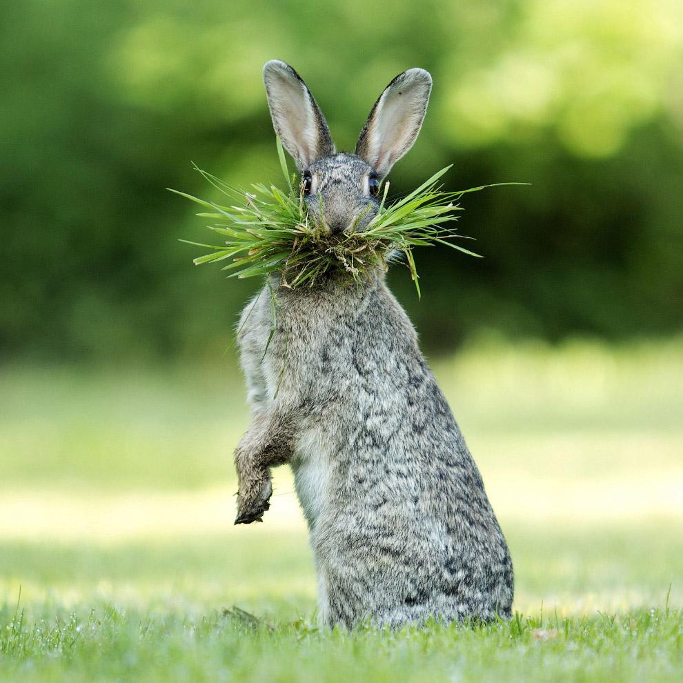 Удивительная красота животных в фотографиях