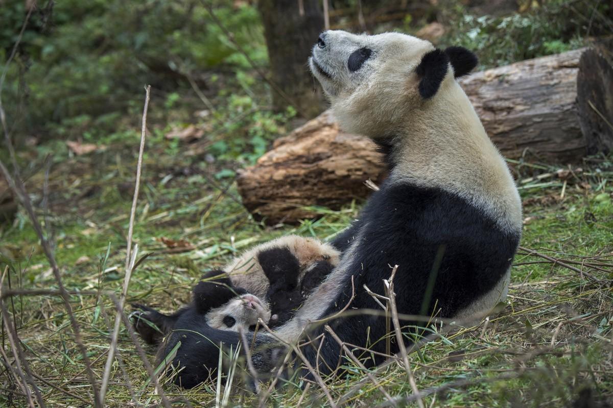 Pandas05