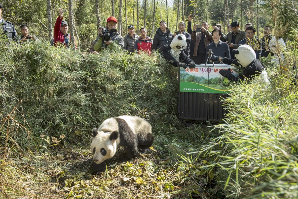 Pandas10