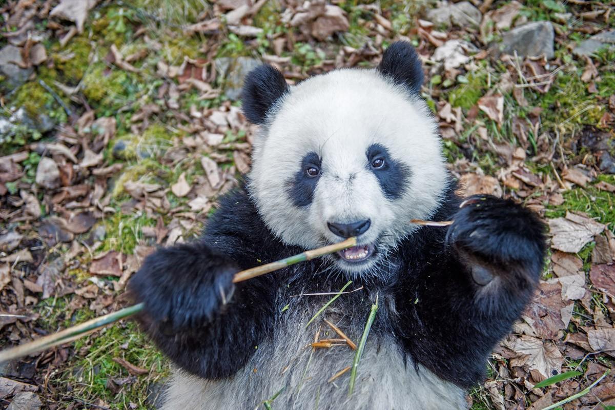Pandas12