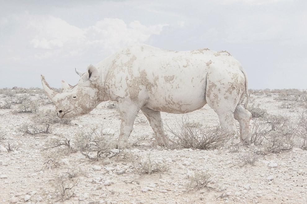 Победитель-в-категории-«Пейзажи».-Намибия-и-носорог.