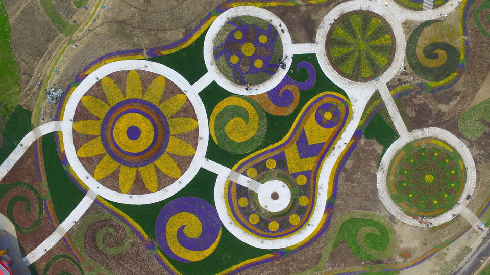 Flower fields at seen from an aerial view in Yangzhou