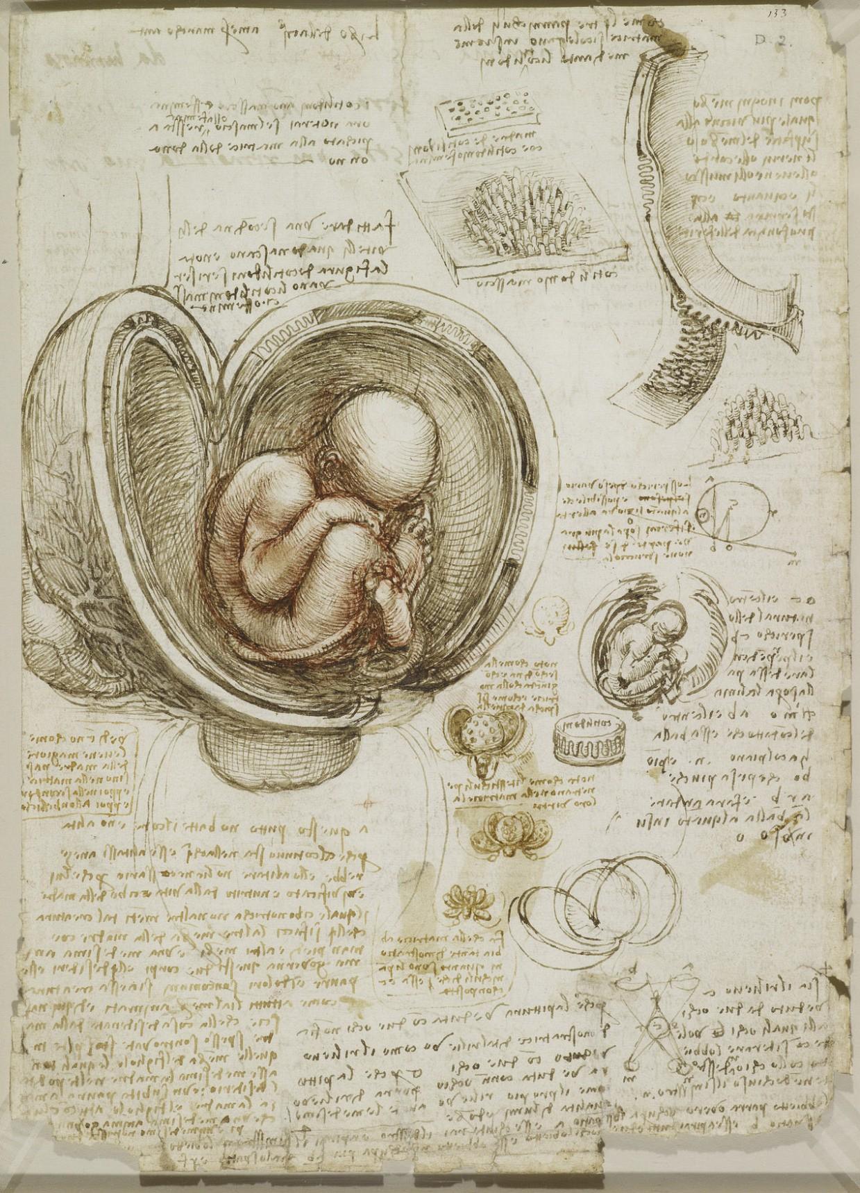 anatomicheskie-risunki-Leonardo-da-Vinchi_1
