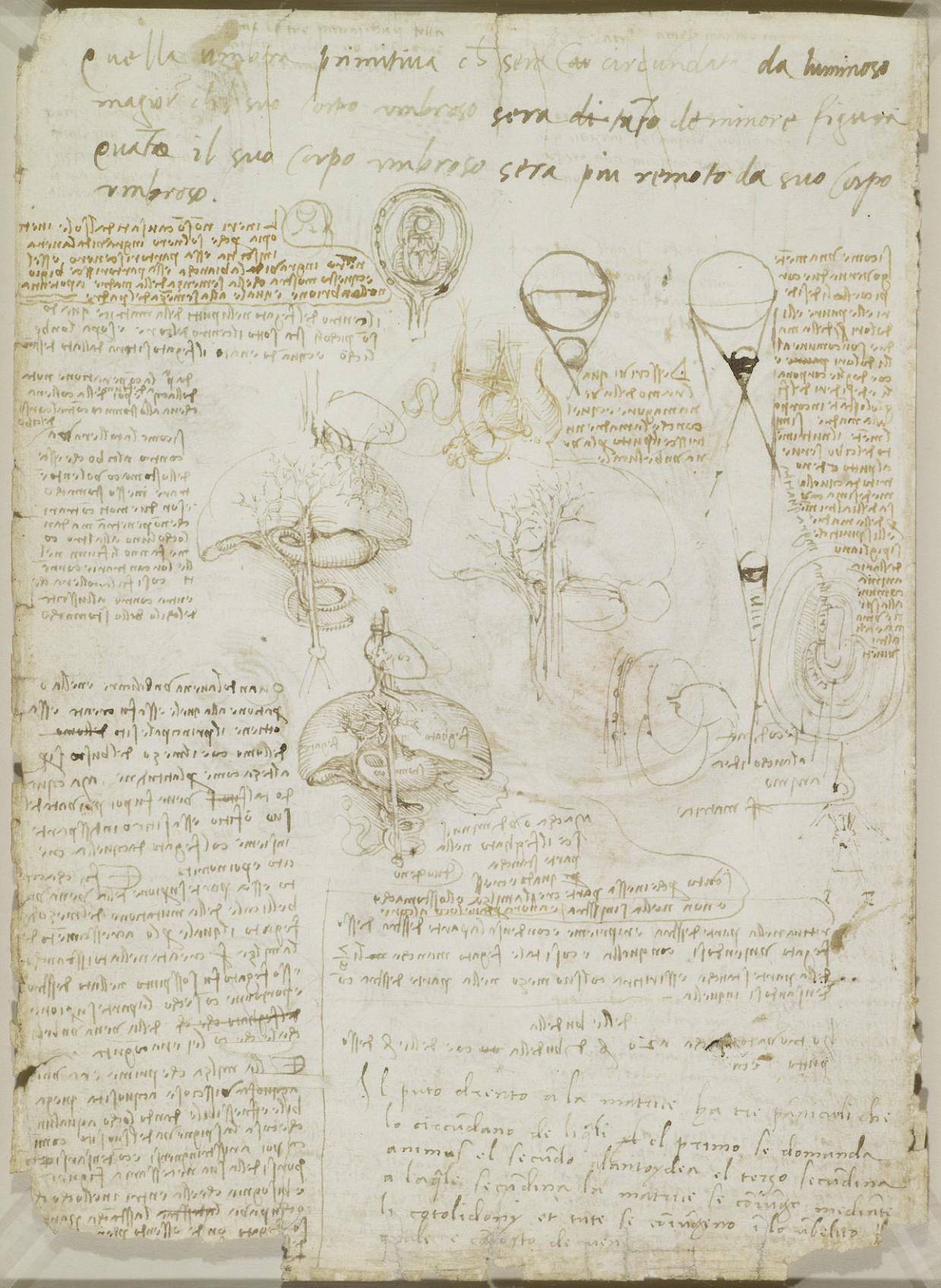 anatomicheskie-risunki-Leonardo-da-Vinchi_2