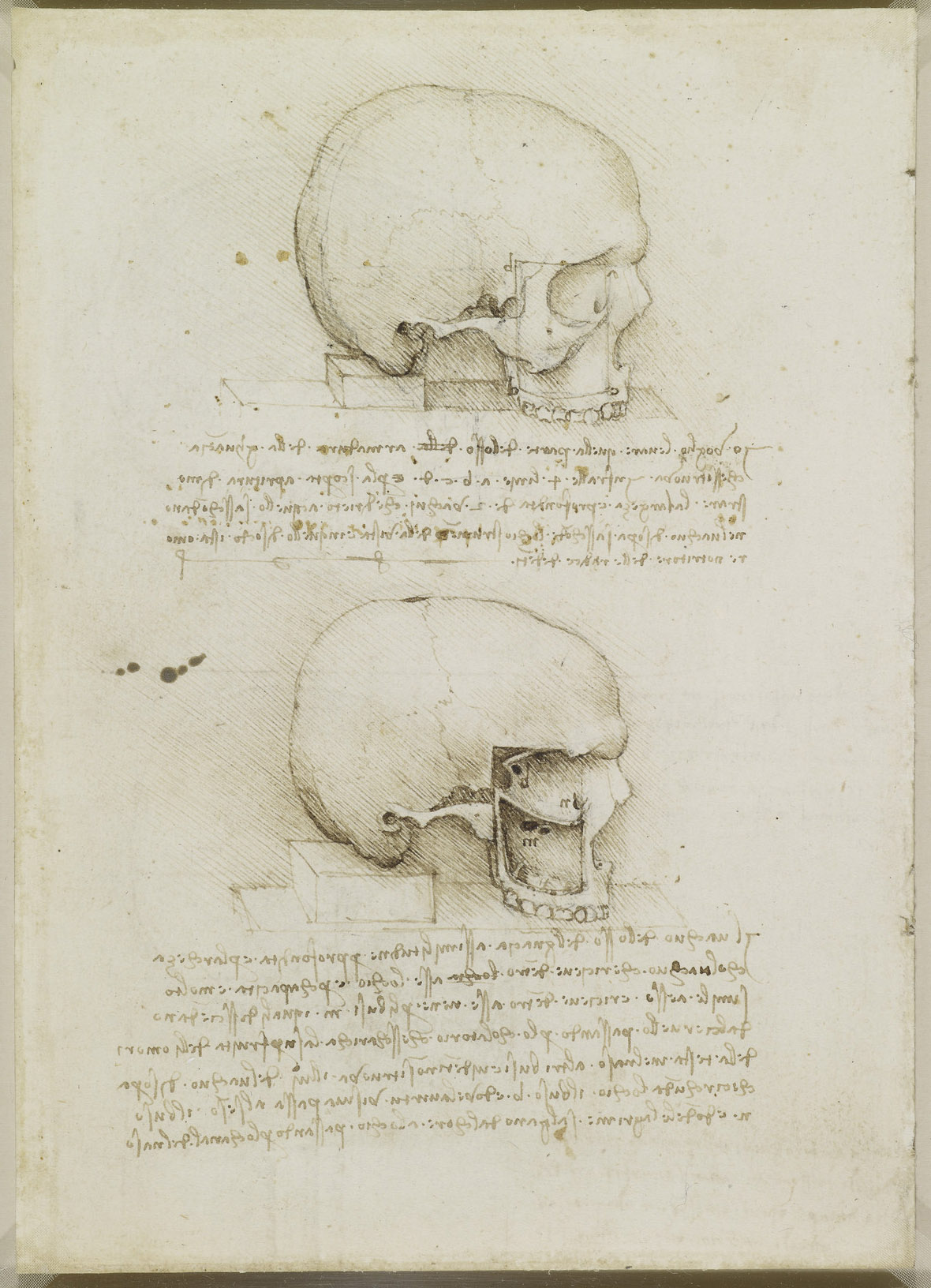 Recto: A skull sectioned. Verso: A cranium sectioned