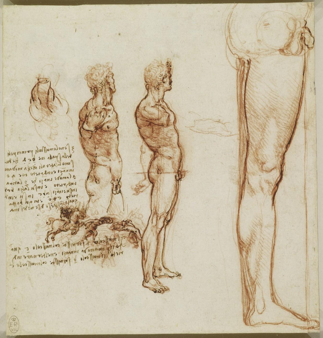 anatomicheskie-risunki-Leonardo-da-Vinchi_6