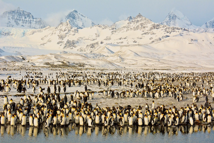 Peaks & Penguins in Antarctic Sunrise