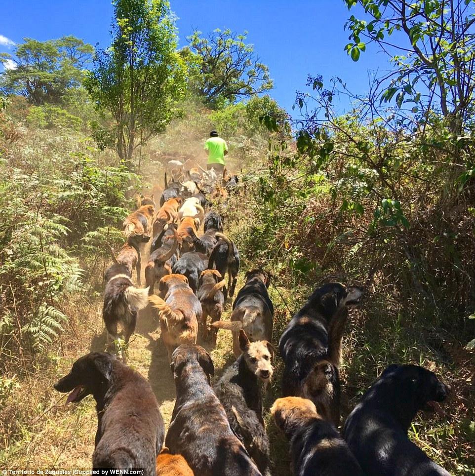 автомобилей пробегом пик приют для собак альтернатива