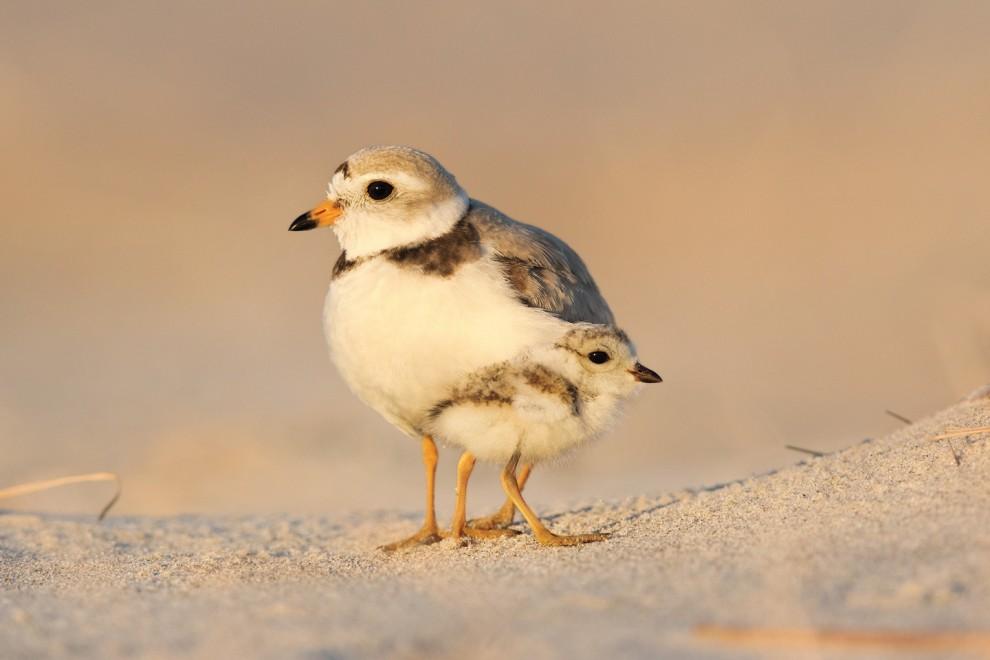 pticy-23-8-990x660