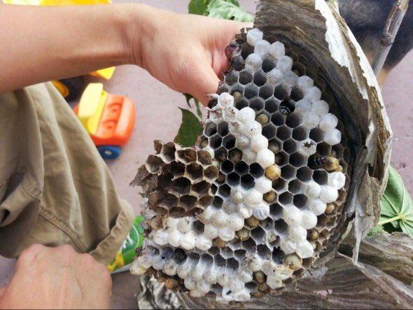 Салат осиное гнездо фото