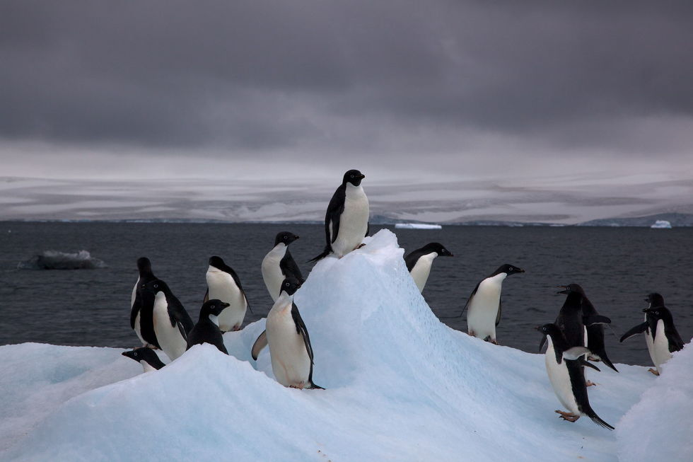 1466155609-1465531474-adelie-penguins-on-iceberg