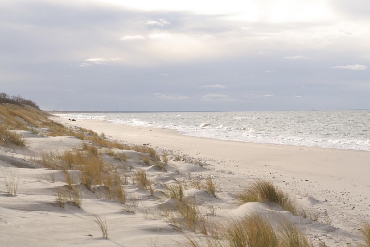 Куршская коса фото пляжей