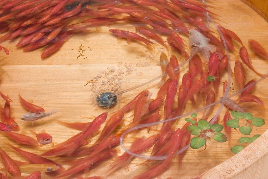 Потрясающие трёхмерные рисунки японского художника Рюсуке Фукахори