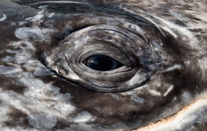 Киты и дельфины на удивительных снимках фотографа, наблюдавшего за морскими животными более 25 лет