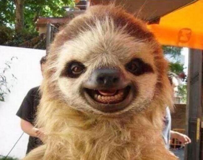 В мире улыбающихся животных