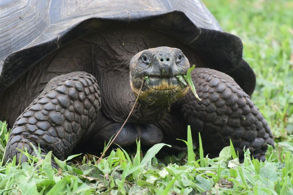 Новые виды животных, открытых в XXI веке