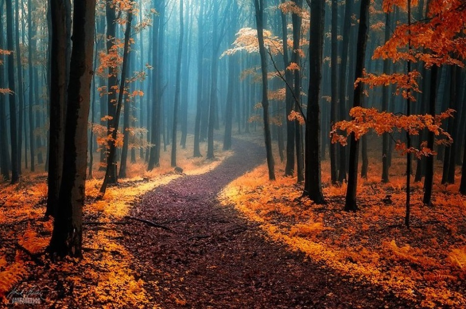 16615315-dreamlike-autumn-forests-janek-sedlar-12__880-1471586638-1000-36e319fe64-1471929235