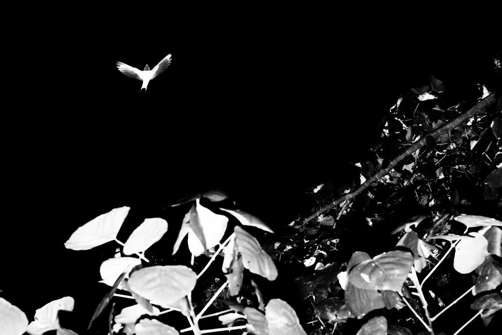 fotograf-Adzhi-Susanto-Anom_1