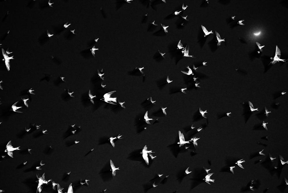 fotograf-Adzhi-Susanto-Anom_56