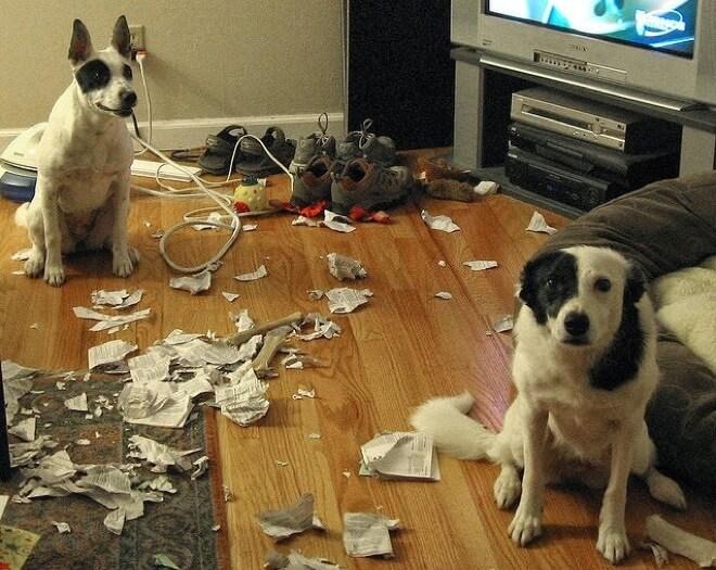 Провинившиеся собаки, которым очень-очень стыдно
