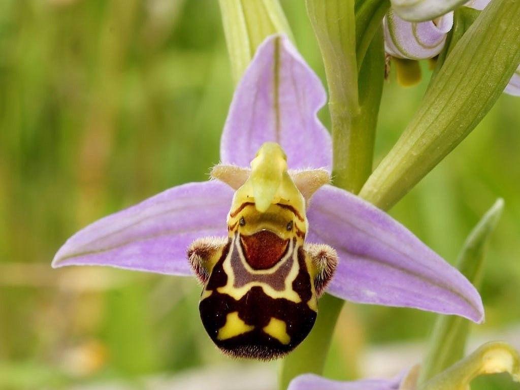 Редчайший цветок в мире
