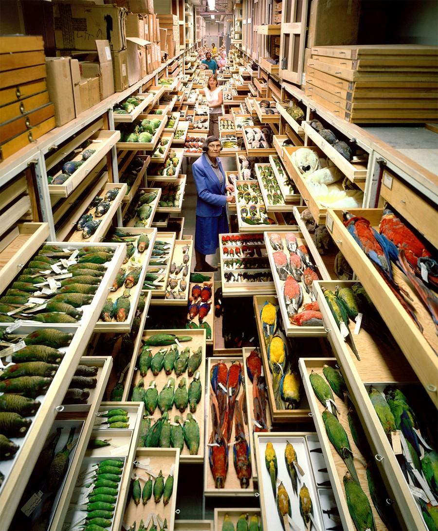 Что хранится в закромах самого крупного музея Смитсоновского института