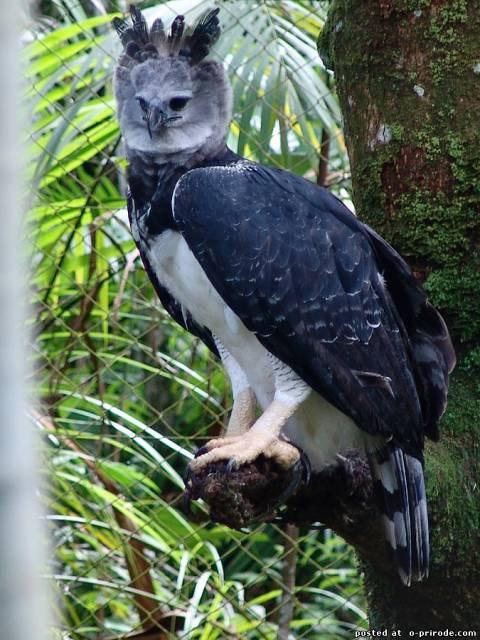 Фото самых больших в мире орлов