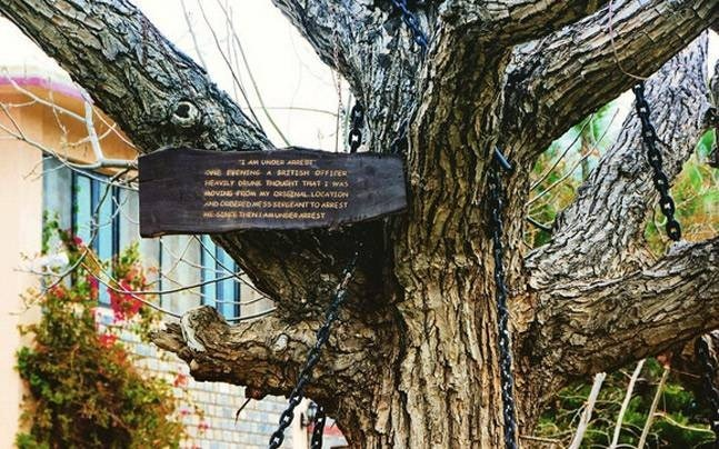 tree-under-arrest-32