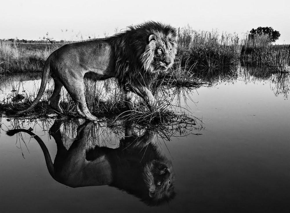 Fotograf-David-Yarrow-dikaya-priroda_12