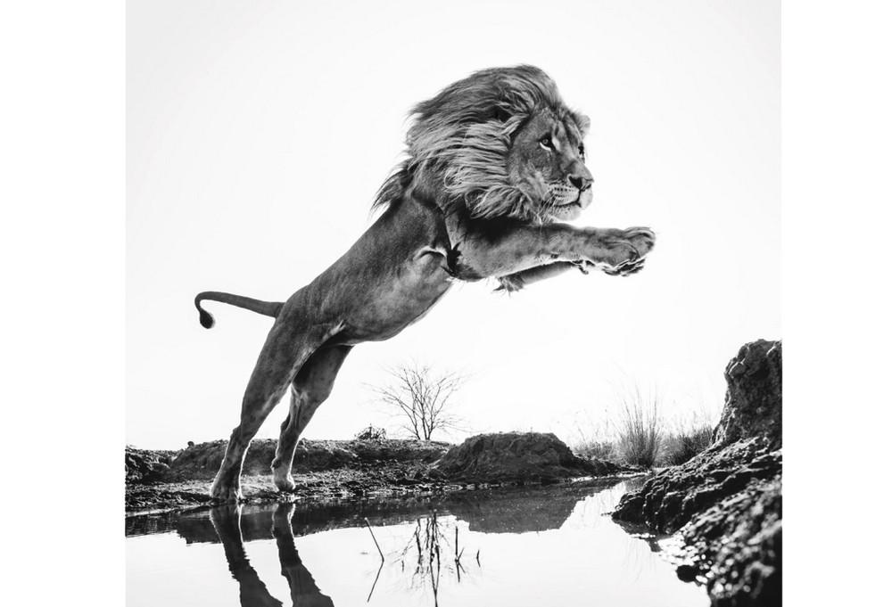 Fotograf-David-Yarrow-dikaya-priroda_8