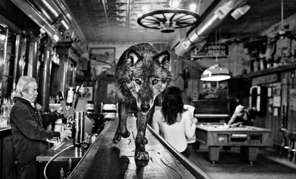 Fotograf-David-_Yarrow-istorii_8