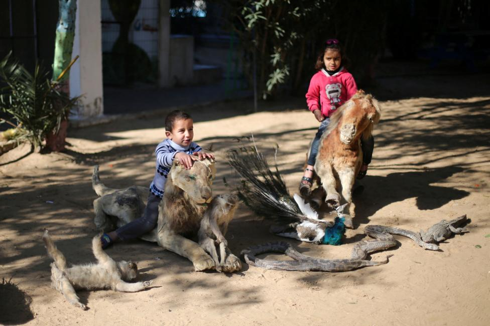 Palestinian children sit on exotic taxidermied animals, which according to their owners died because they could not afford to feed the animals, at a park in Rafah in the southern Gaza Strip